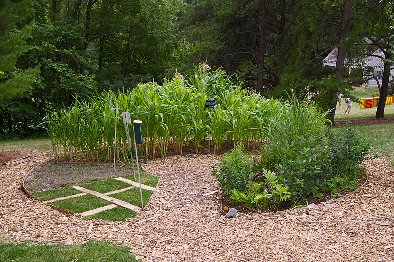 Full garden in July